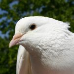 Ever wonder why doves, not elephants, are symbols of peace?