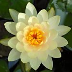 Where can you find your guru? Dwelling in the lotus of your heart.