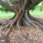 Rejoicing in the roots of your family tree?